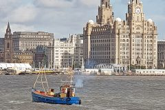 Manx Beauty passing the Liver Buildings on the river Mersey last month.