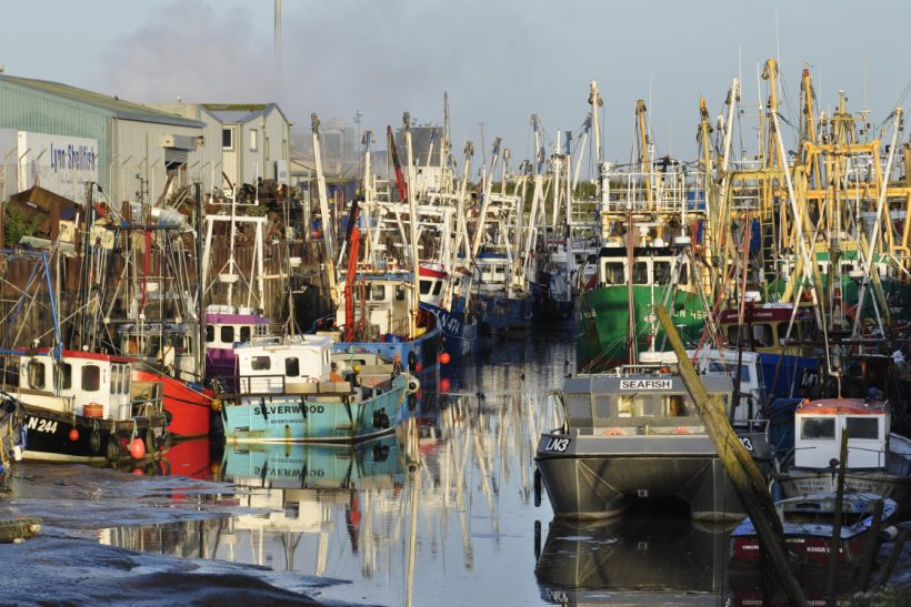 The Wash shrimp fishery  – in cloudy waters