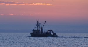 Beaming has been the Wash shrimping method for generations.