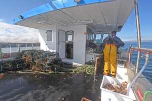 Skipper David Buchan hauling creels on his self-built catamaran Leah III south of Boddam.