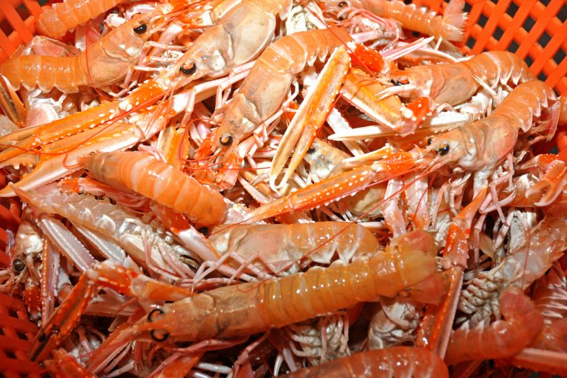 Scots prawn grounds probe
