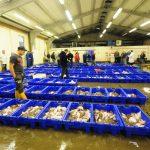 But Lowestoft fishmarket is still in operation…