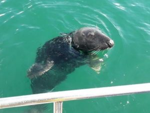 This picture was taken by James Corbett from the boat, showing a seal appearing the moment the engine was started.