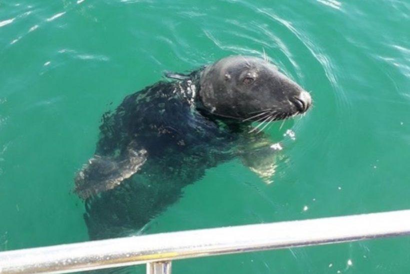 Inshore Corner: Seals have the upper hand