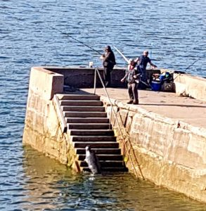 A mobile phone picture showing a seal actively waiting for anglers to provide it with a meal.