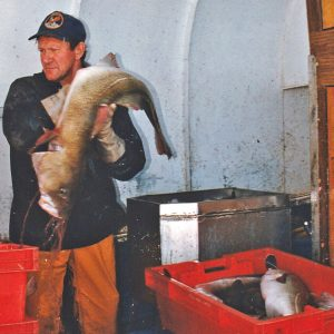 … and washing a 'four-to-the-box' cod.