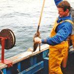 Skipper Roger Thoelen takes a sprag aboard while jigging.