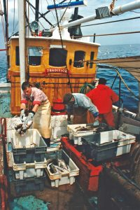 Selecting and boxing codling on Tradition.