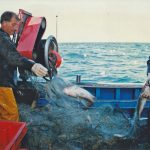 The first fleet of nets yielded six stone of codling.