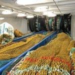 Three nets are hauled along the full-length trawl deck by three sets of split sweepline winches…