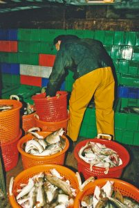 Selecting and boxing well-presented fish in Carol H's fishroom.