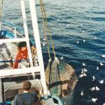 Taking a good bag of prawns aboard.