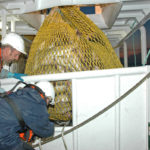 Releasing a bag of cod.