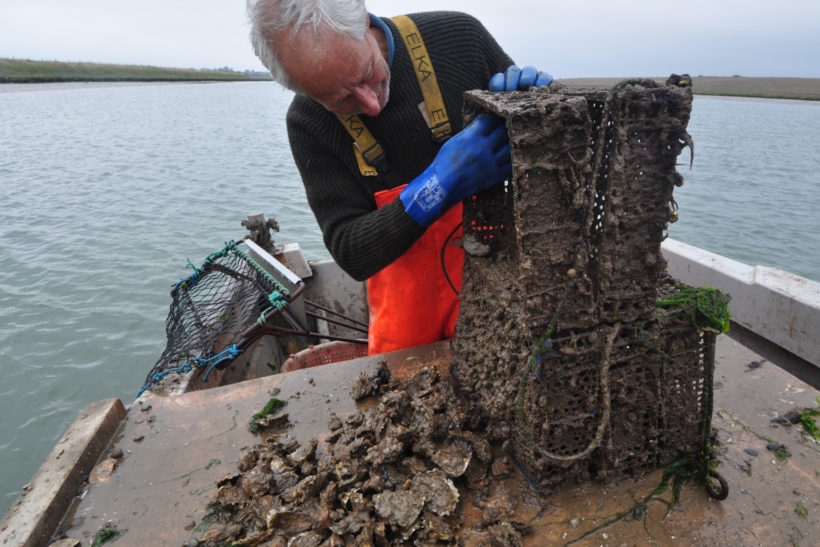 Butley oysters: Flavour of a quiet creek