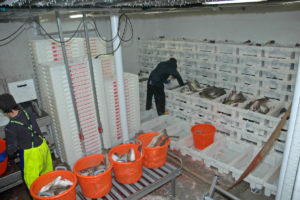 Boxes steadily accumulated in the fishroom during the first 24 hours of successful fishing.