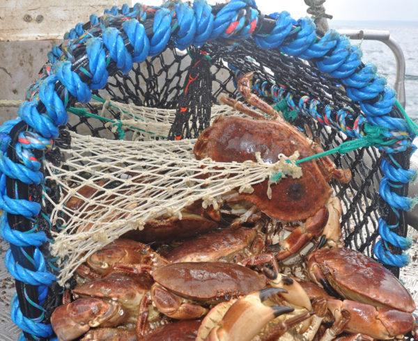 Shellfish boost plans