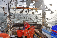 Cara Lee: Single-handed trawling on Scarborough Castle grounds for prime and whiting