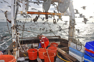Single-handed skipper Brian Cox sorting the first haul on Cara Lee.