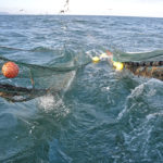 The toe-ends of the net are hauled back to the trawl gantry…