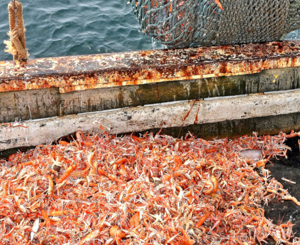 Prawn sector needs help