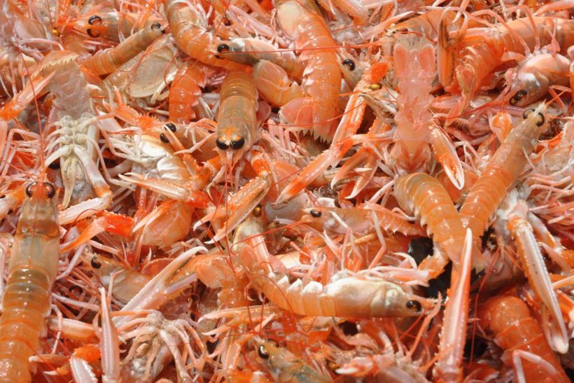 £1m for Scots prawn group