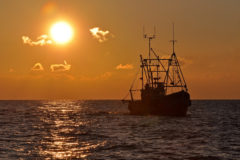 Manx Ranger: scallop dredging in IOM waters from Peel