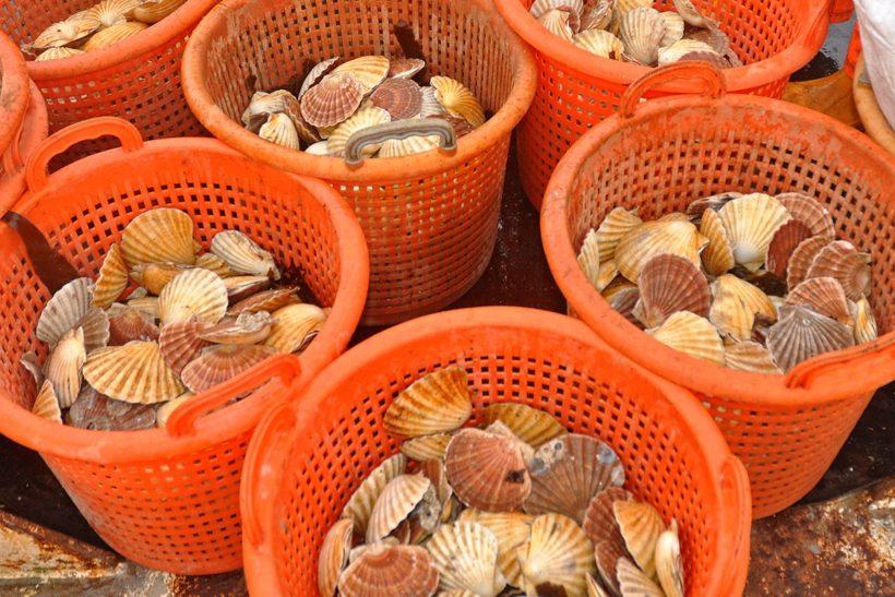 Live mollusc exports ban