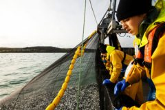 Sustainable SW fisheries celebrated on World Ocean Day by MSC