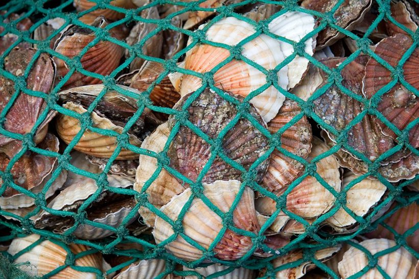 Scrutiny of shellfish and under-15m scallop fleets