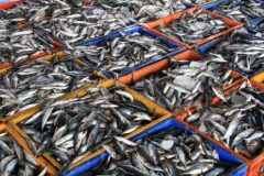 Scots seafood exports '27% lower than in 2018' overfishing shared stocks