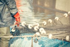 New call for applications to UK Seafood Innovation Fund