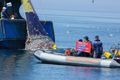 Greenpeace stops French fly-dragger fishing on MPA