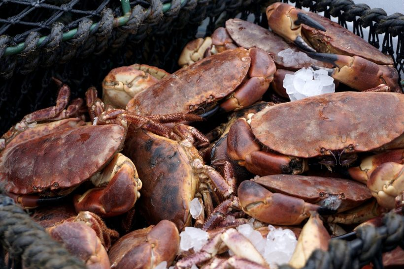 Covid impacts on crab sector analysed in new report