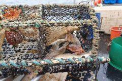 SFA: 'Don't cut cod quotas next year'