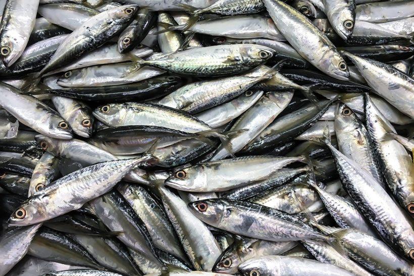 EU industry calls for action on mackerel overfishing